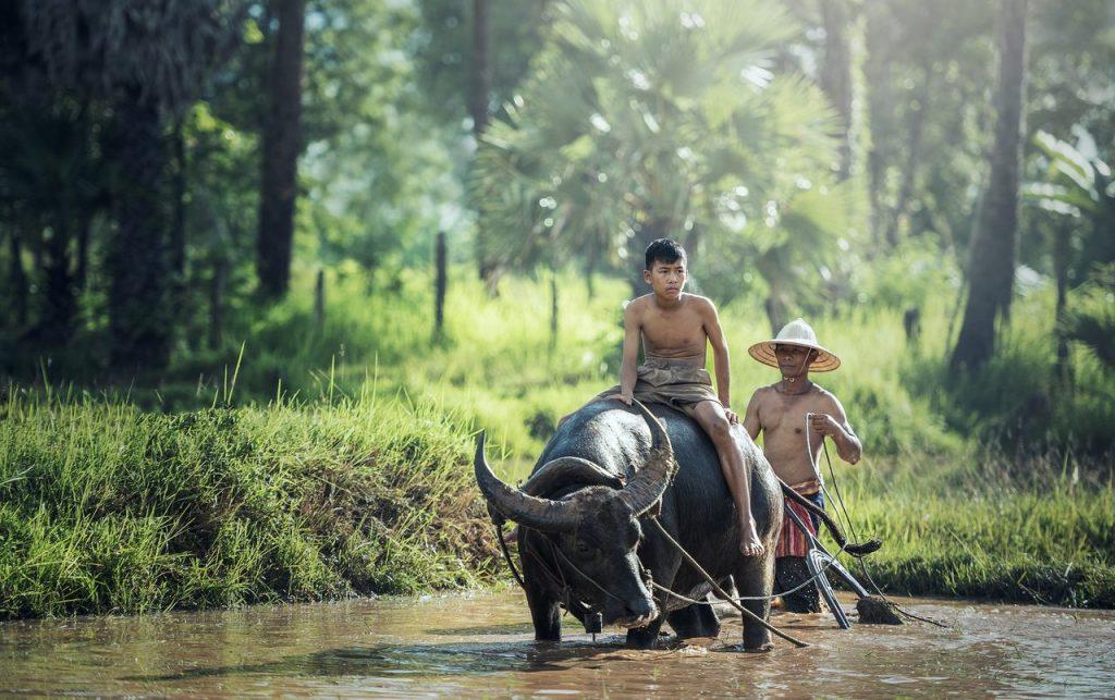 Agricultura com auxilio de animais