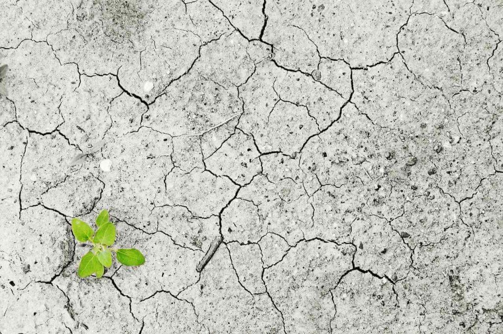 Chão seco com planta