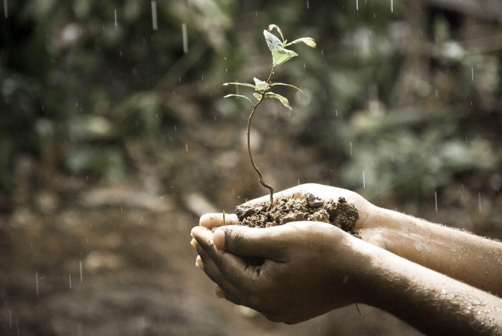 Mãos segurando muda de planta