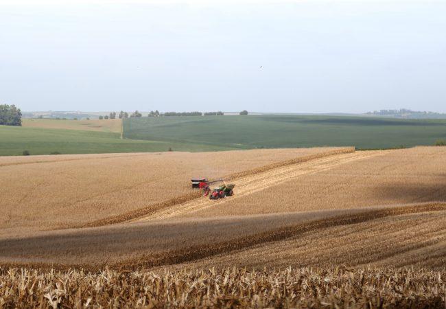 Colheita em lavoura de milho